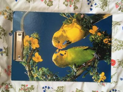 Papagáj mintás rajztábla